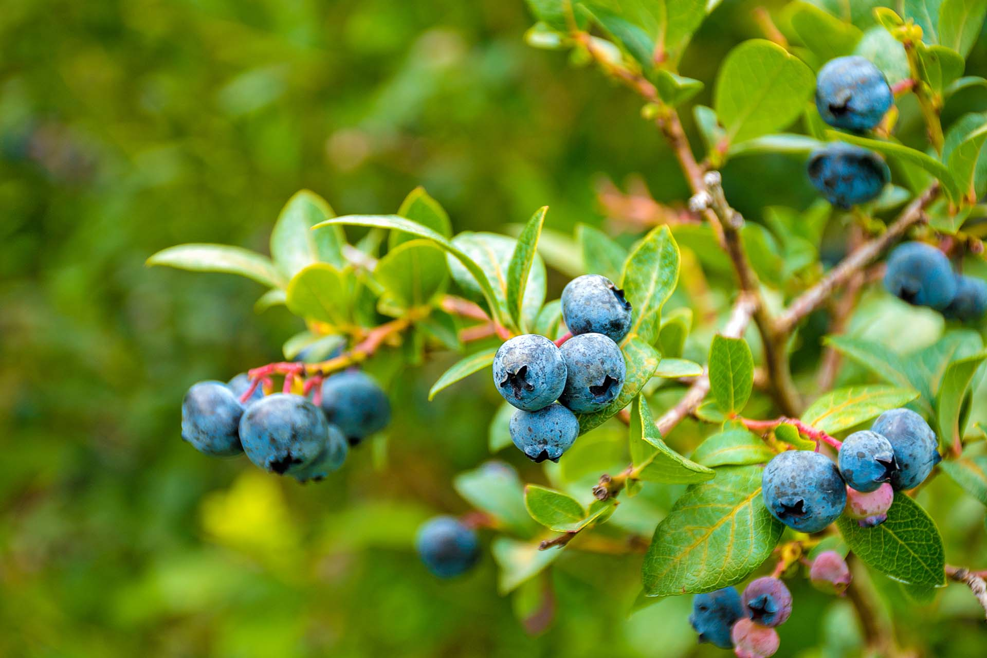 Fruit Trees & Shrubs